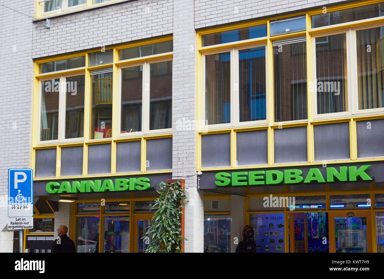 Cannabis Seedbank store on Sint Antoniesbree Straat, Amsterdam, Netherlands - Stock Image