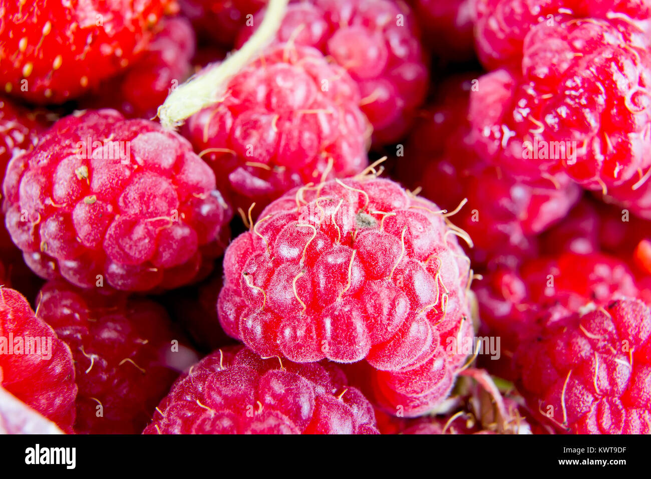 A lot of ripe berries. Fruit background - Stock Image
