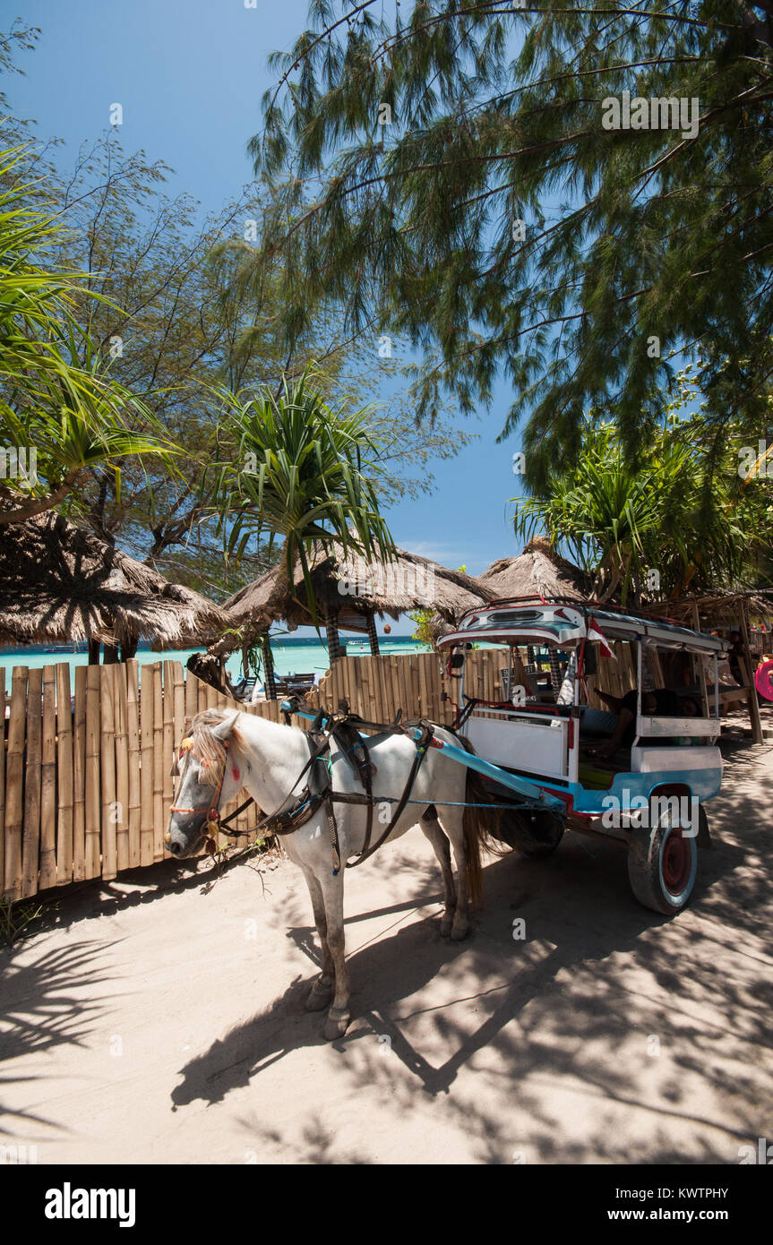 Indonesia, Lombok, Gili archipelago, Gili Meno, the only mean of transport is the cidomo, horse drawn carriage - Stock Image
