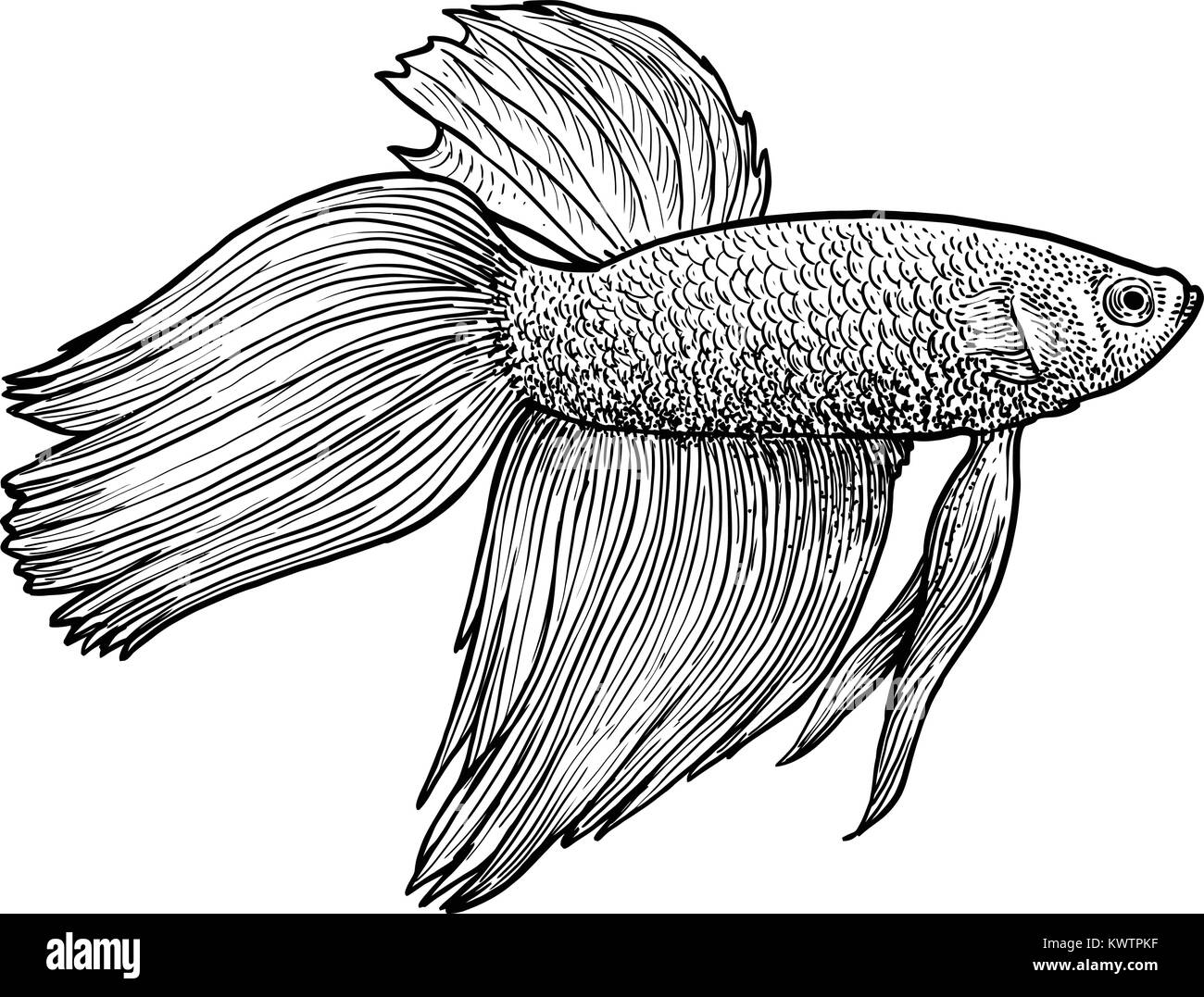 Fish Drawing High Resolution Stock Photography And Images Alamy