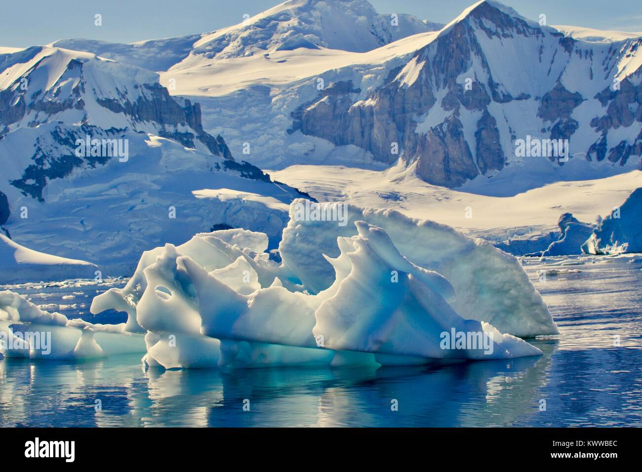 seals in antartica Stock Photo