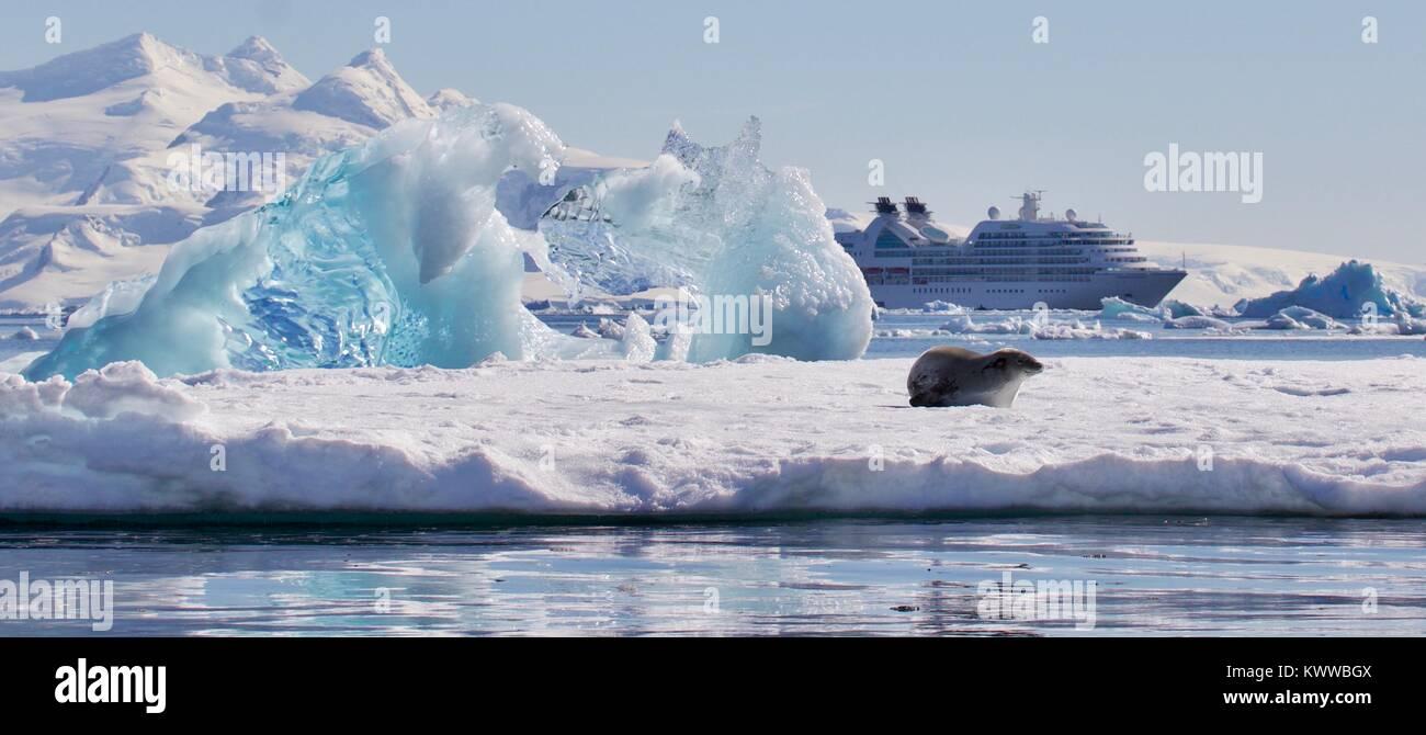 seals in antartica - Stock Image