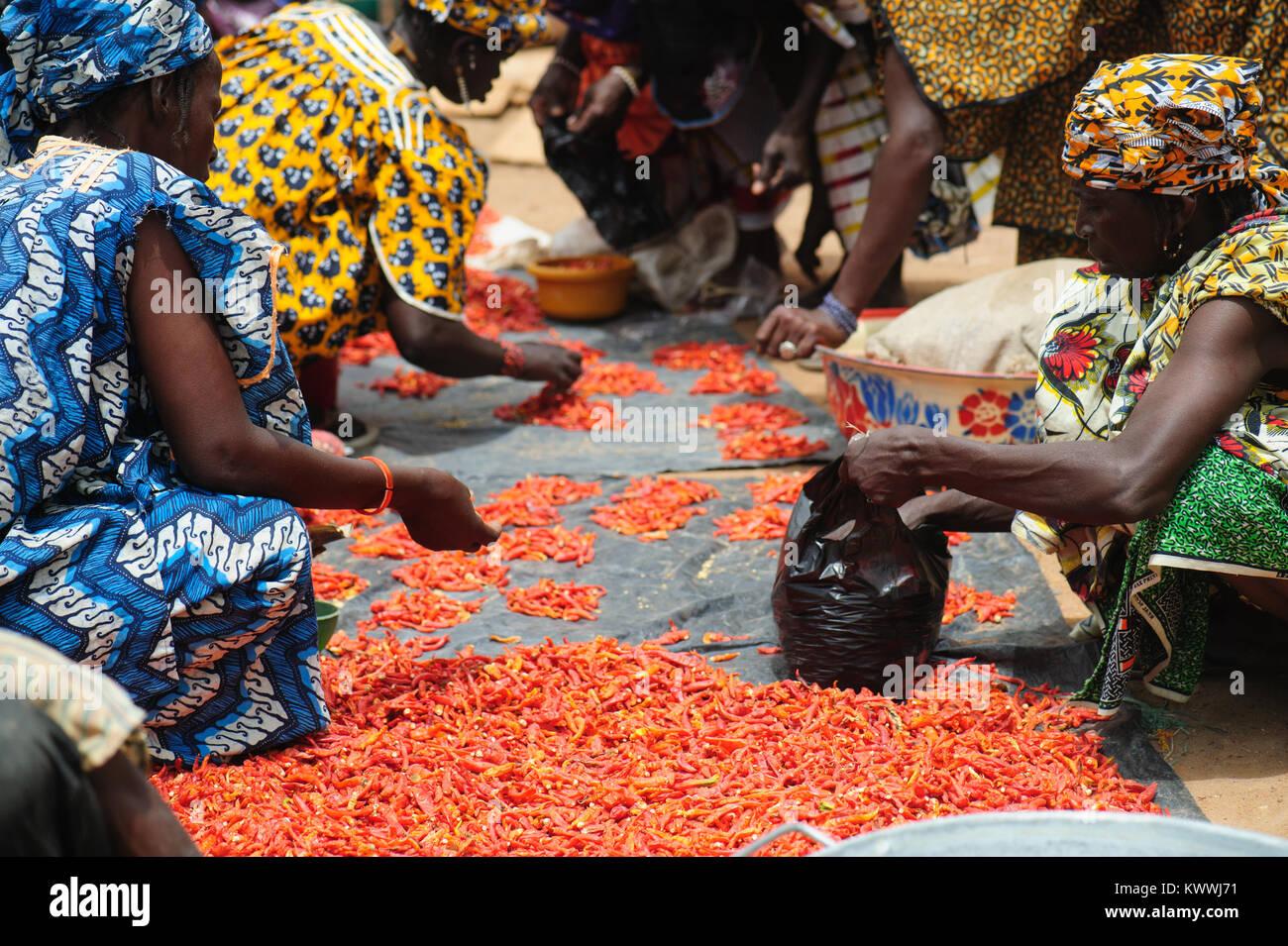 Mali Africa Black African People Gathering And Preparing Chili Stock Photo Alamy