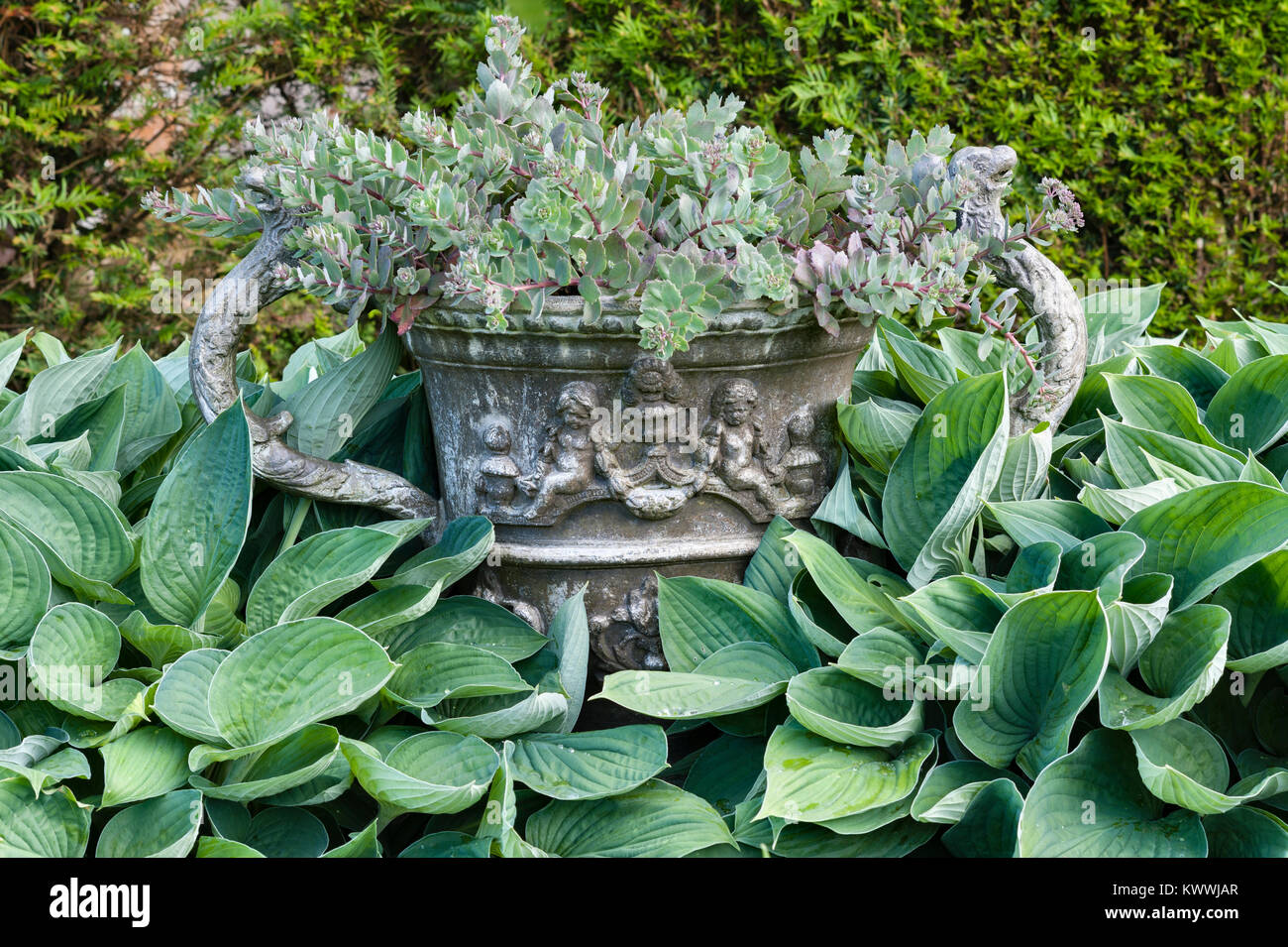 Lanhydrock, Bodmin, Cornwall, UK. An old lead urn in the gardens, surrounded by hostas - Stock Image