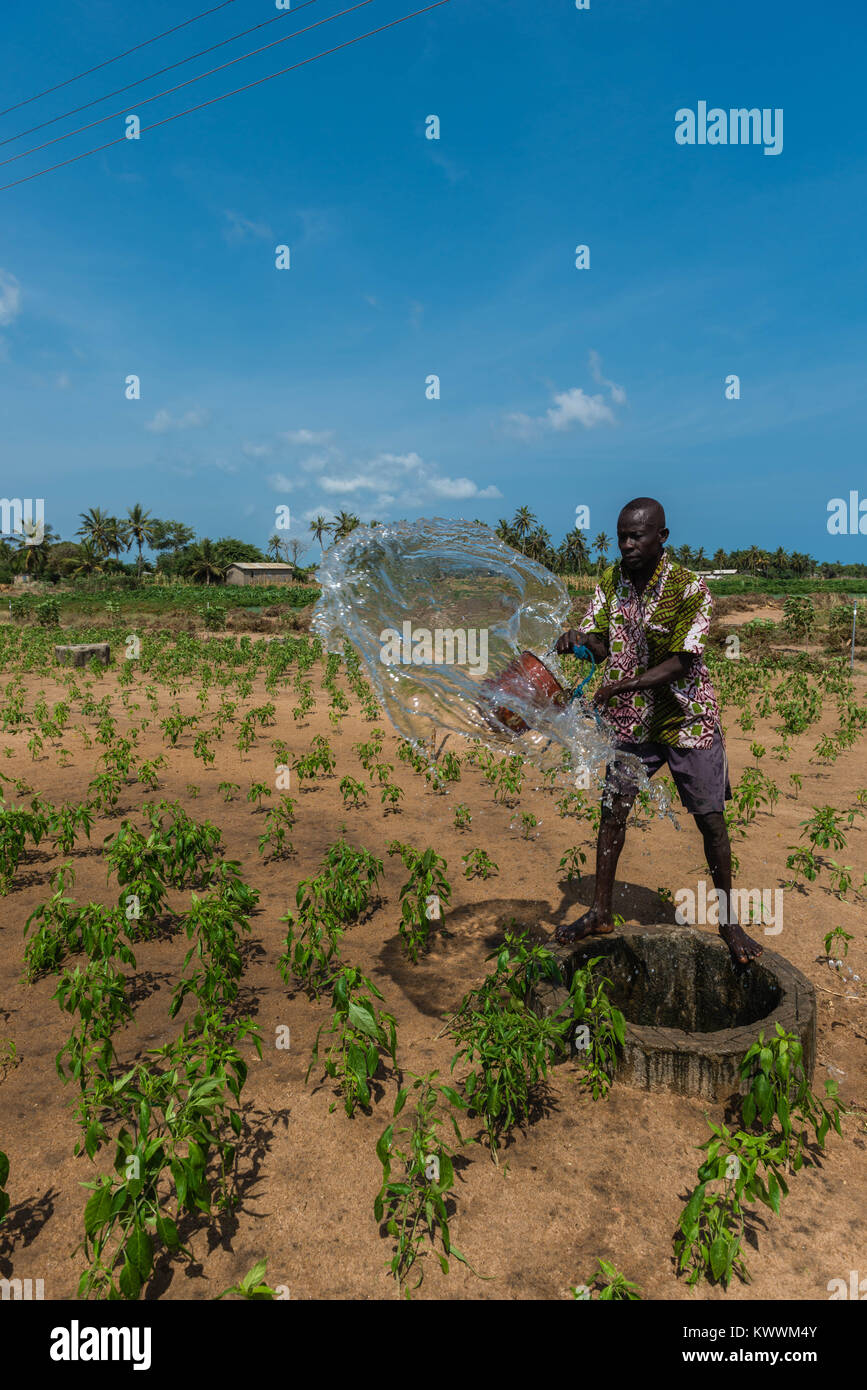 Irrigating fields  the old way, pulling up water from the well, watering the nearby fields by buckets full of water, - Stock Image