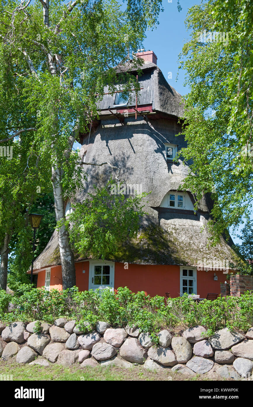Thatched-roof windmill, reconstructed to a living house at Wustrow, Fishland, Mecklenburg-Western Pomerania, Baltic - Stock Image