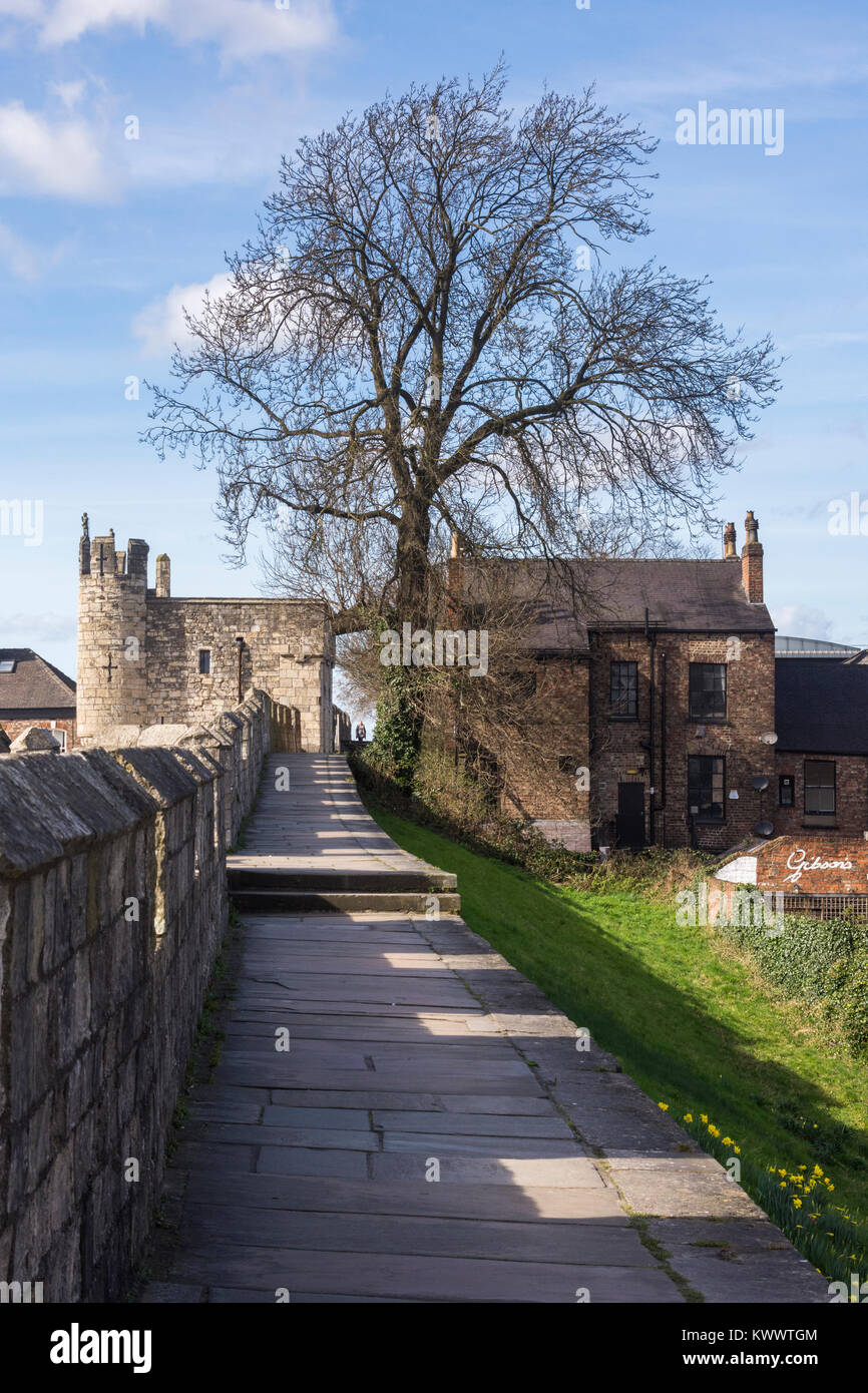 Blue sky, ancient, historic York city walls, battlements' walkway & Micklegate Bar, a medieval gateway to - Stock Image