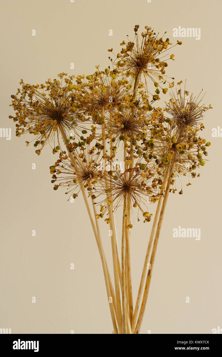A dried flower arrangement with seed pods visible. - Stock Image