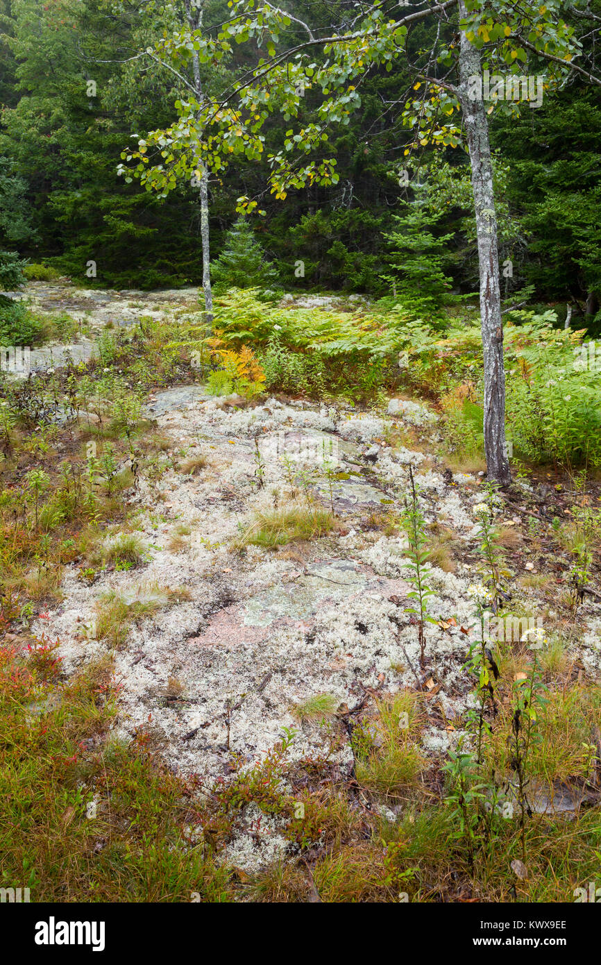 A small rocky outcropping against the treeline of a forest along the Otter Cove Trail. Acadia National Park, Maine Stock Photo