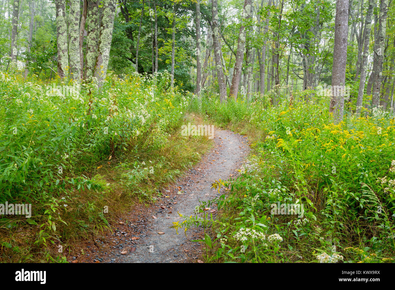 The Otter Cove Trail winding through a thick forest on Mount Desert Island. Acadia National Park, Maine Stock Photo
