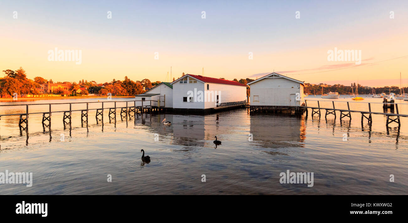 Two black swans (Cygnus atratus) on the Swan River beside the boatsheds at Freshwater Bay. Stock Photo