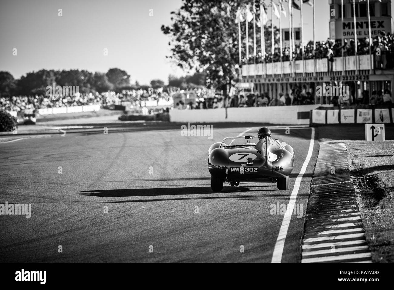Jaguar D-Type, MWS 302, exits the chicane & heads down the Pit Straight at Goodwood Racing Circuit - Stock Image