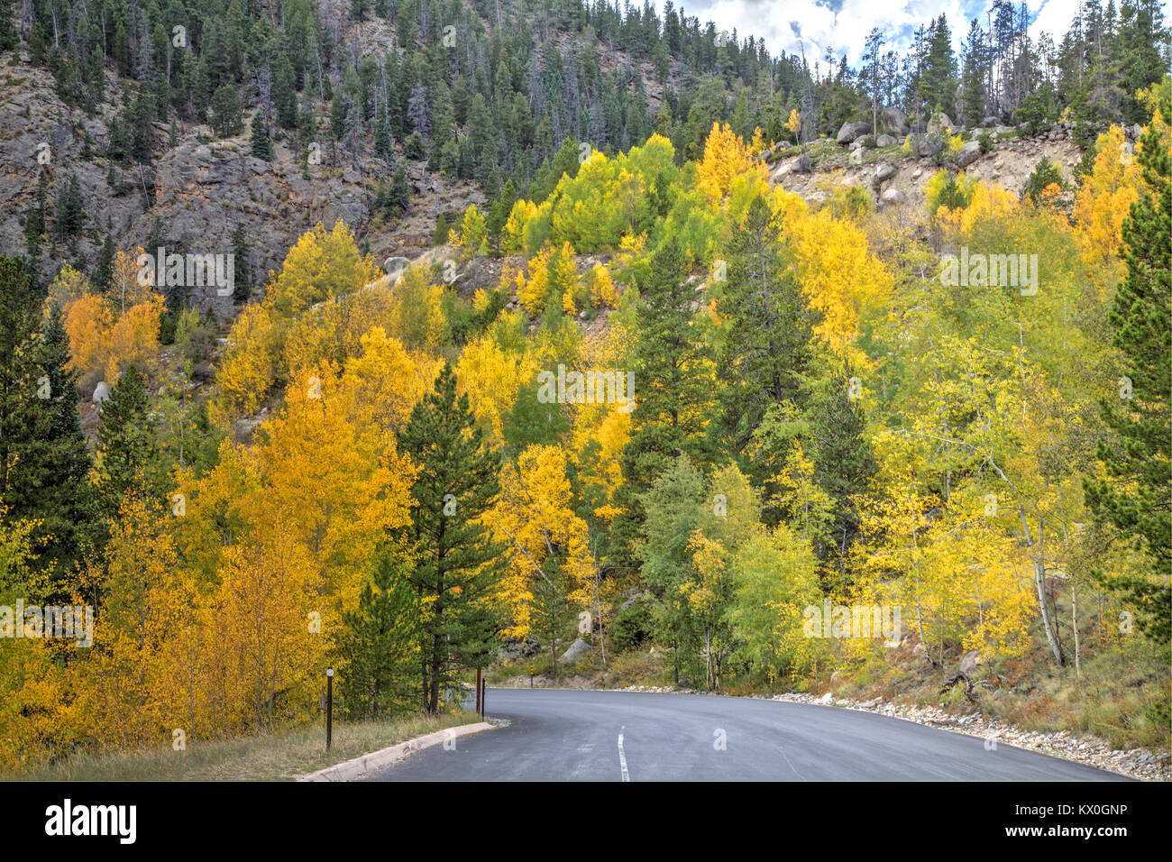 A mixture of aspen leaves transforming from green to yellow in autumn. - Stock Image