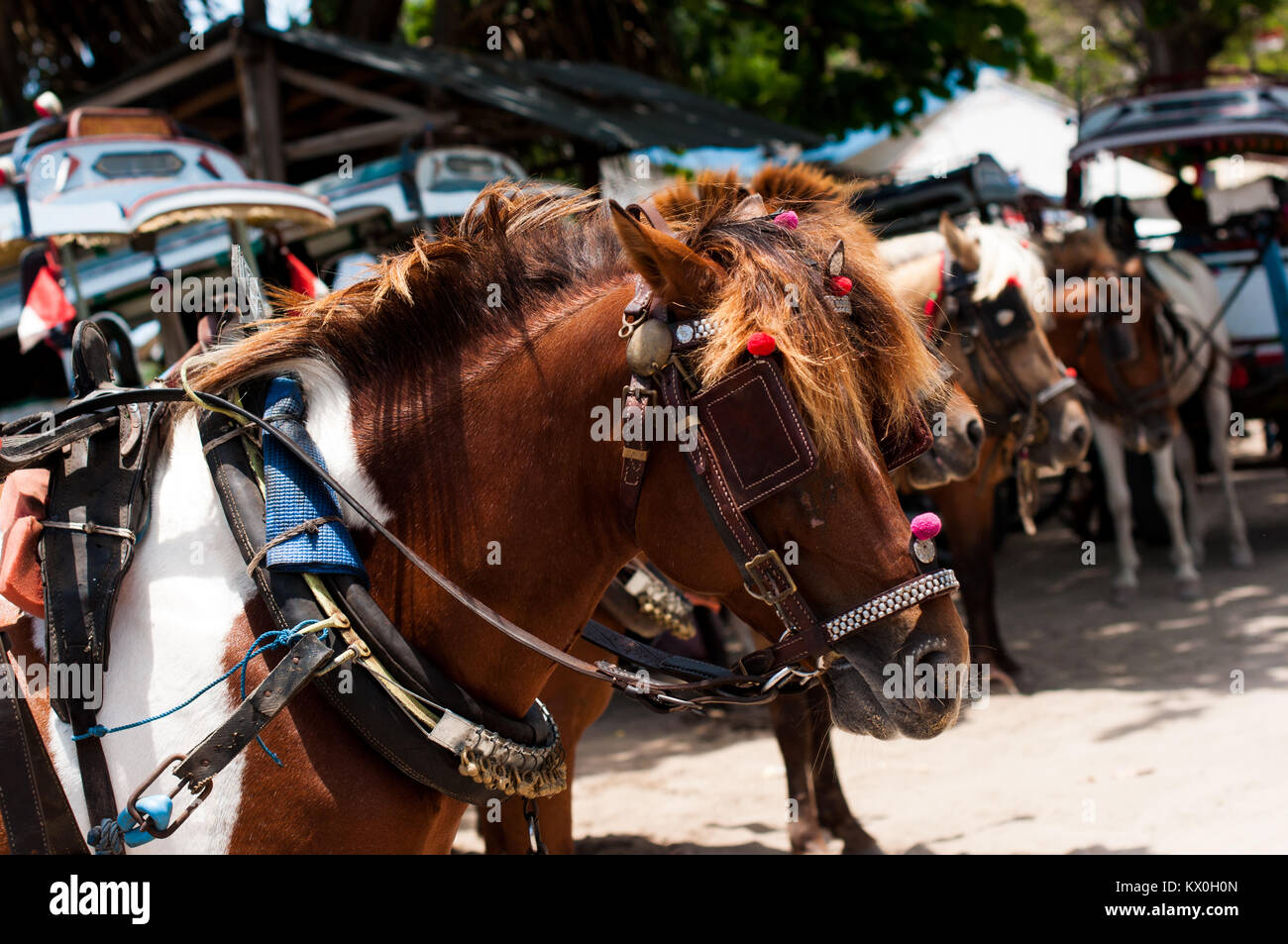 Indonesia, Lombok, Gili archipelago, Gili Air, the only mean of transport is the cidomo, horse drawn carriage - Stock Image