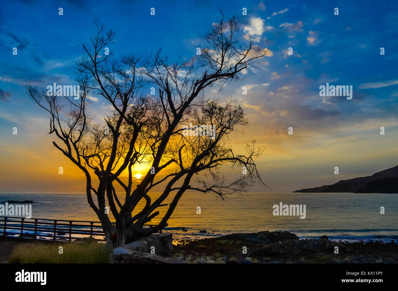 Blue and orange tones of sunrise through the obstacles of a tree. - Stock Image