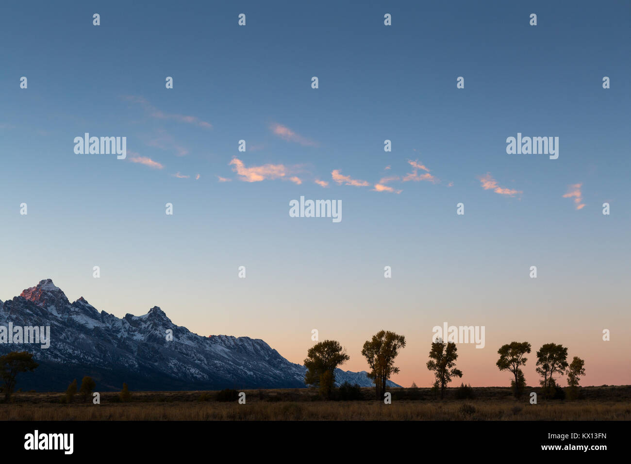 Small clouds hit with sunset light floating above a line of cottonwood trees below the Teton Mountains. Grand Teton Stock Photo