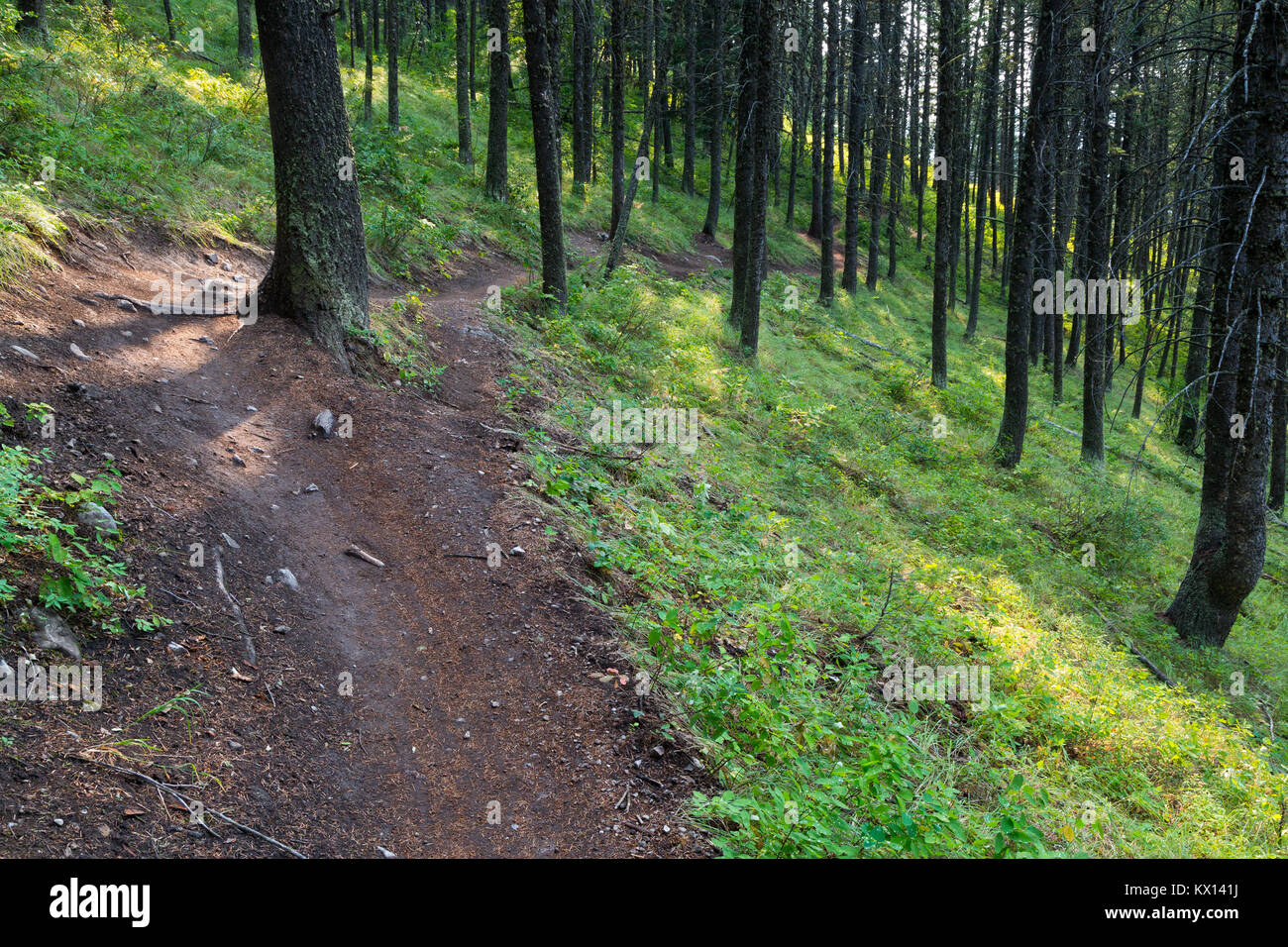 The Sink or Swim Trail winding through the forest on Snow King Mountain in the Gros Ventre Mountains. Bridger-Teton - Stock Image