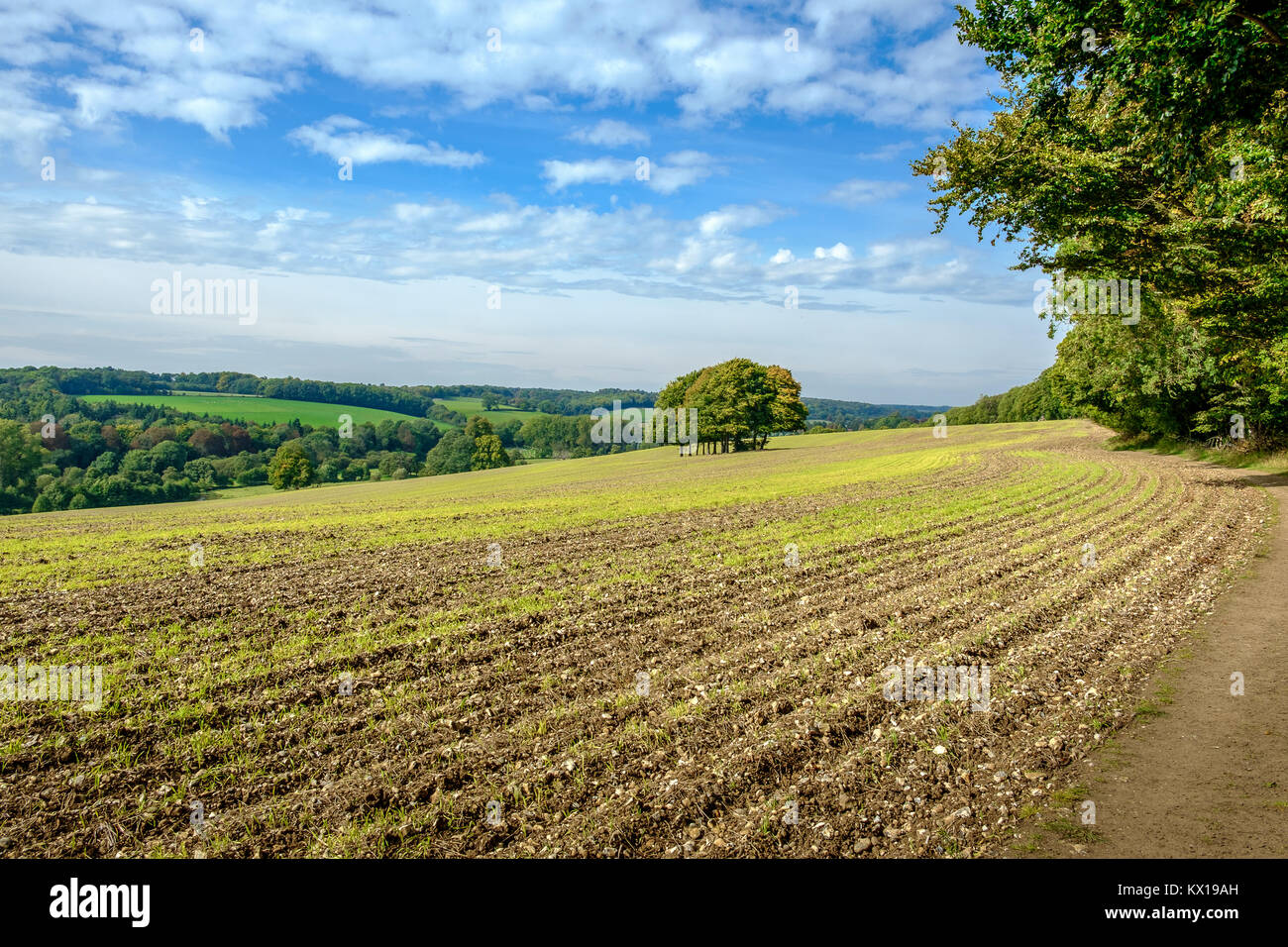 Agricultural field along a right of way in the Chilterns, Chess Valley. - Stock Image