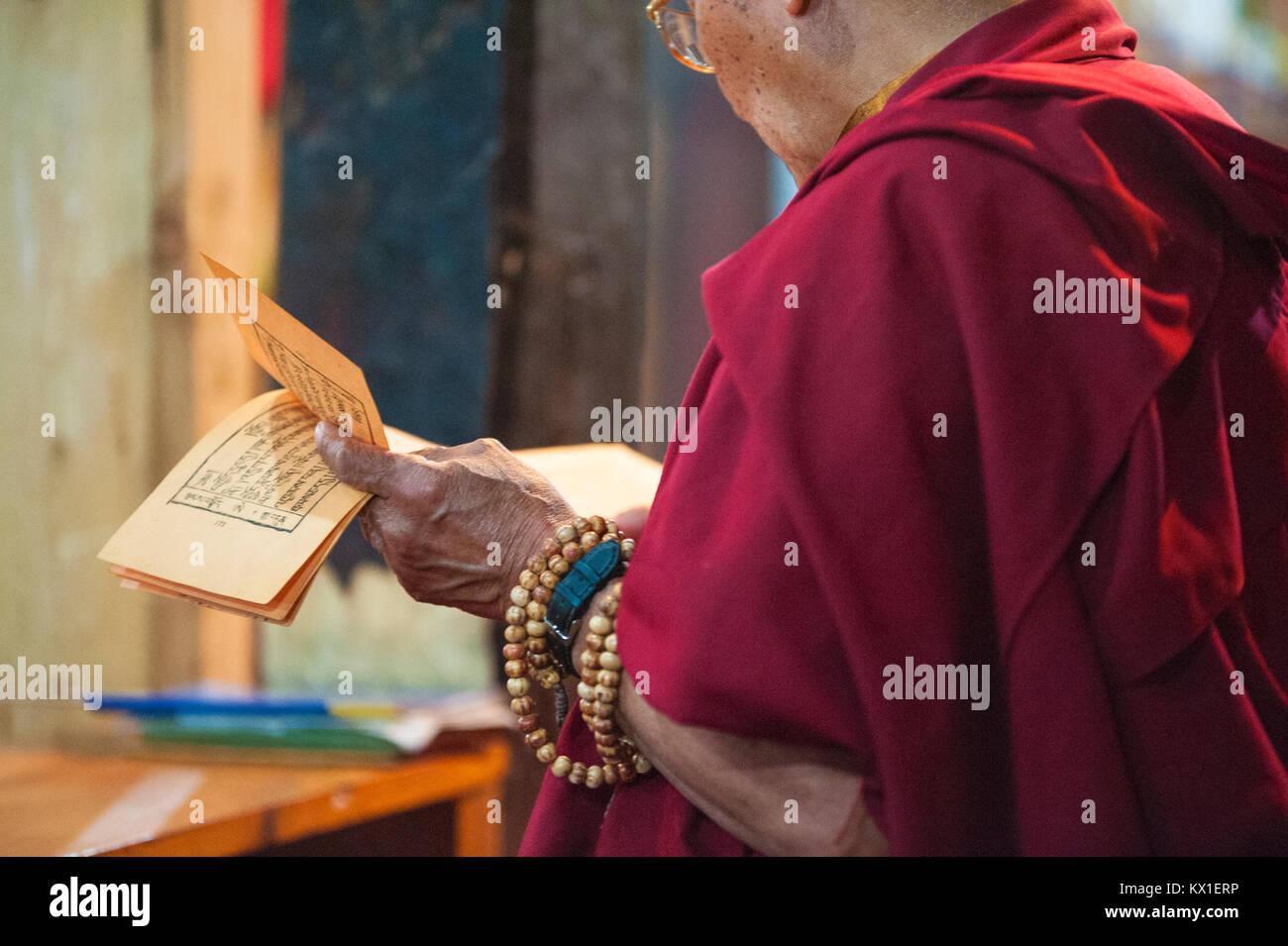 Buddhist monk praying in the monastery, Ladakh, Jammu and Kashmir - India. Tibetan culture. © Antonio Ciufo - Stock Image