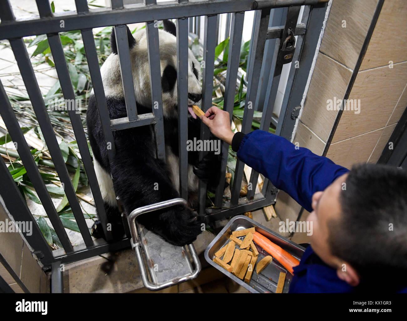 Changchung, China. 6th January, 2018. (180106) -- CHANGCHUN, Jan. 6, 2018 (Xinhua) -- Giant panda 'Jia Jia' - Stock Image