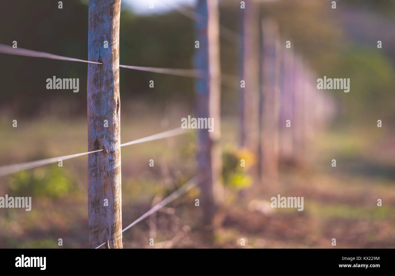 Wire fence with wooden posts. - Stock Image