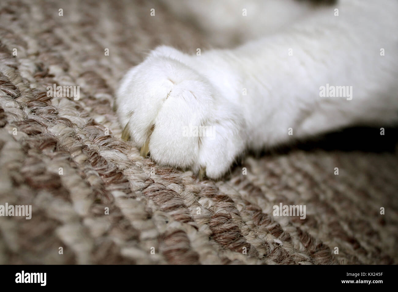 Cat Claw Digging Into Carpet - Stock Image