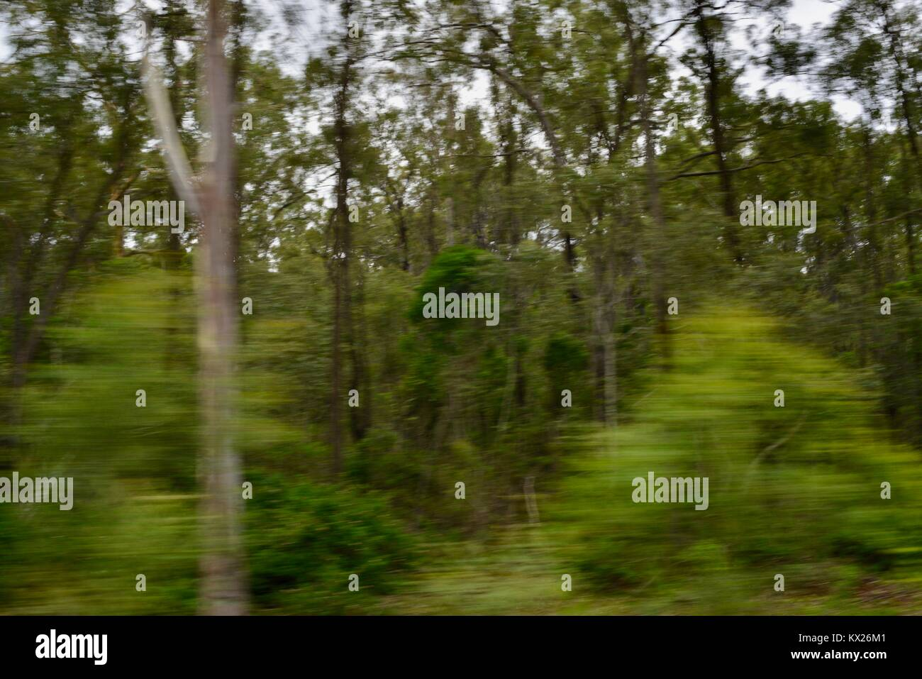 Trees moving due to camera induced blur, Queensland, Australia - Stock Image