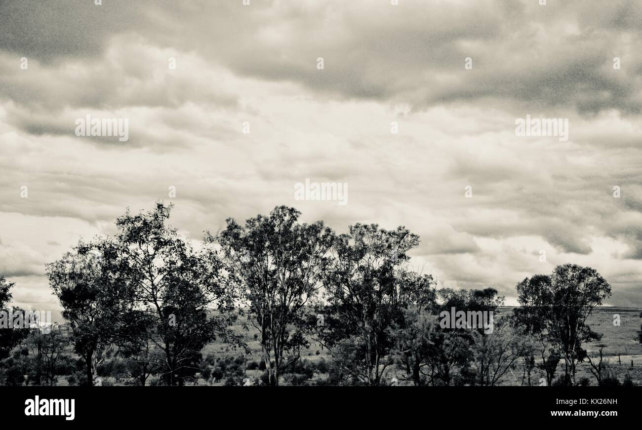 Dramatic black and white images of Australia, december, Queensland, Australia - Stock Image