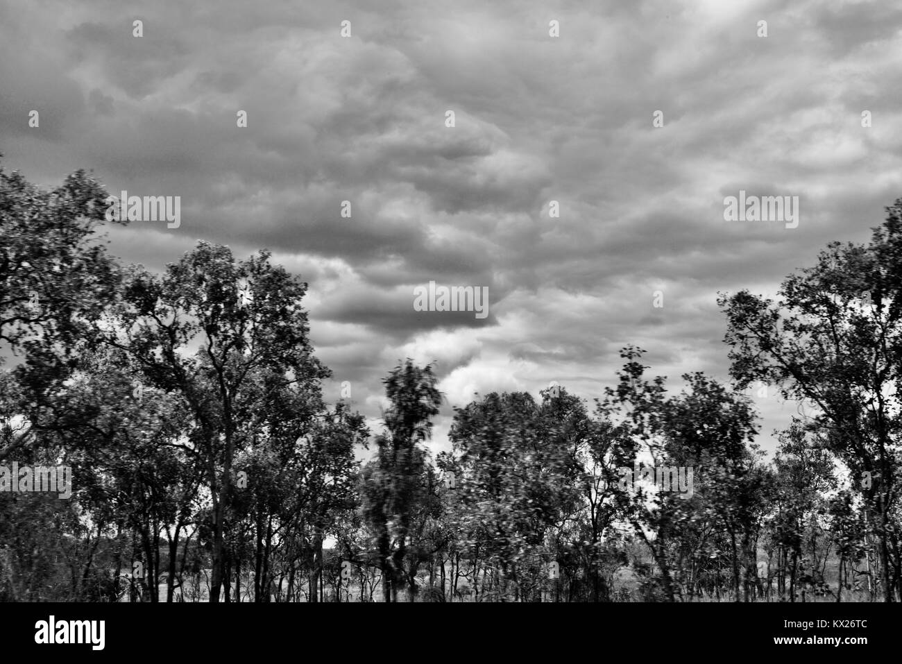 Dramatic black and white images of Australia, december, Queensland, Australia Stock Photo