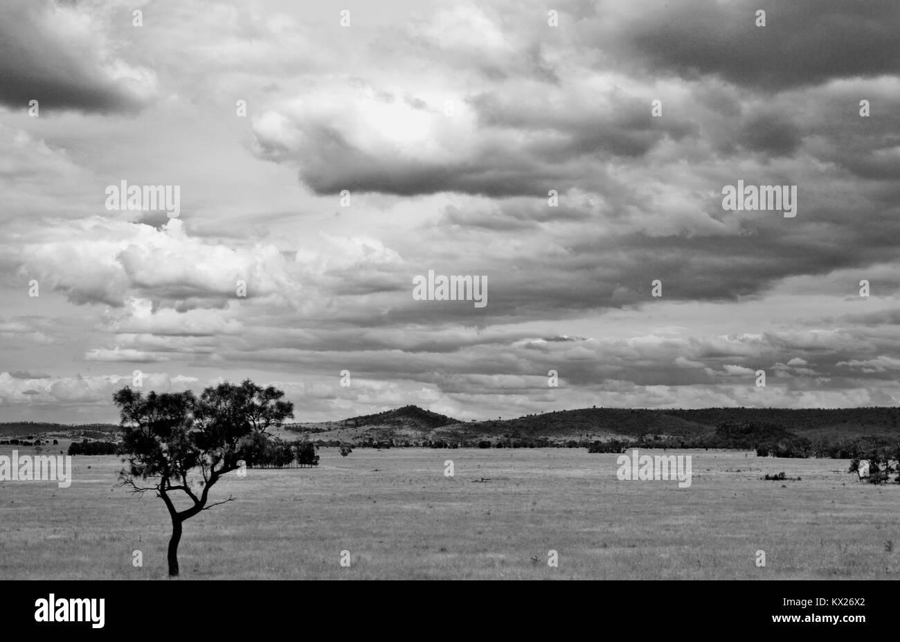 Dramatic black and white images of Australia, december, Queensland, Australia - Stock Image