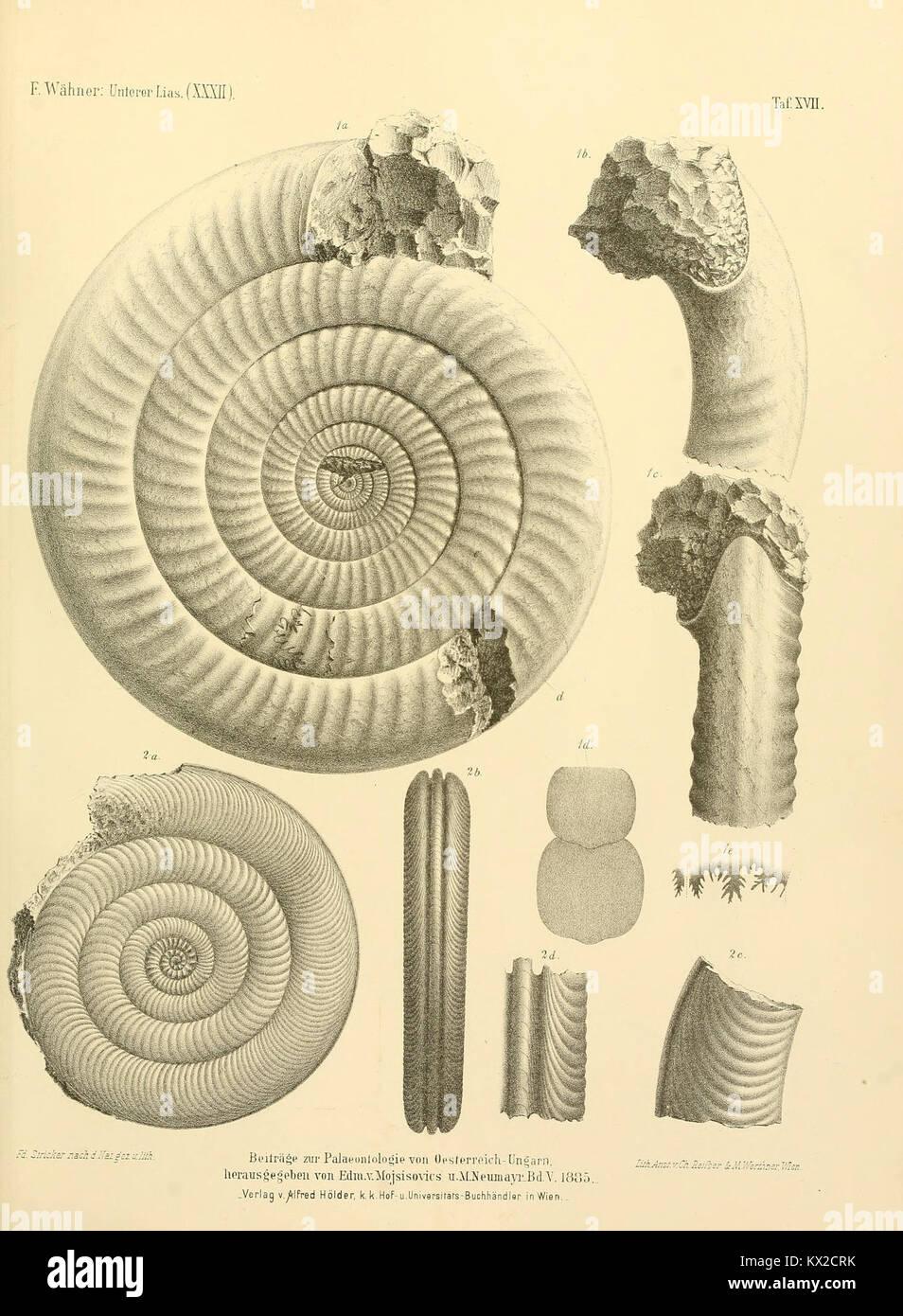 Beiträge zur Paläontologie Österreich-Ungarns und des Orients BHL14482038 - Stock Image