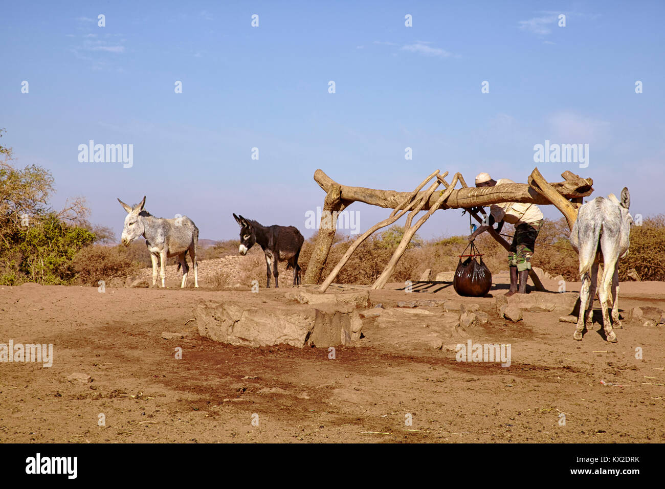 Man fetching water from a well with a donkey near Naqa, Sudan (North Sudan), Africa - Stock Image