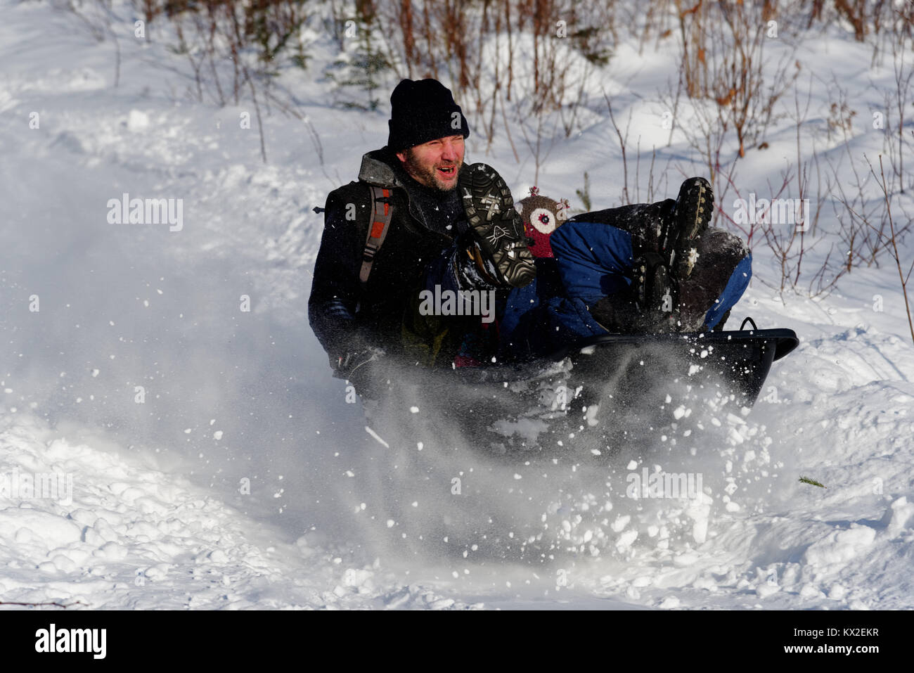 A man in a sledge making a lot of powder snow as he sledges through fresh snow - Stock Image