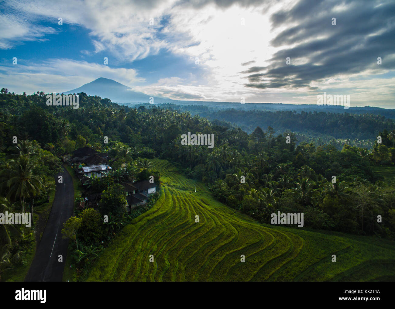 Beautiful morning in rice terrace of Tabanan Bali, with mount Batukaru (Batukau) in the background. - Stock Image