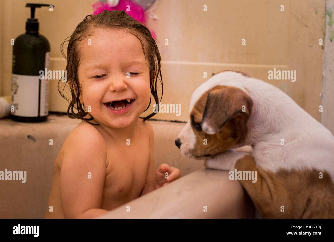 A toddler girl laughing in a bath tub with a puppy looking at her. - Stock Image