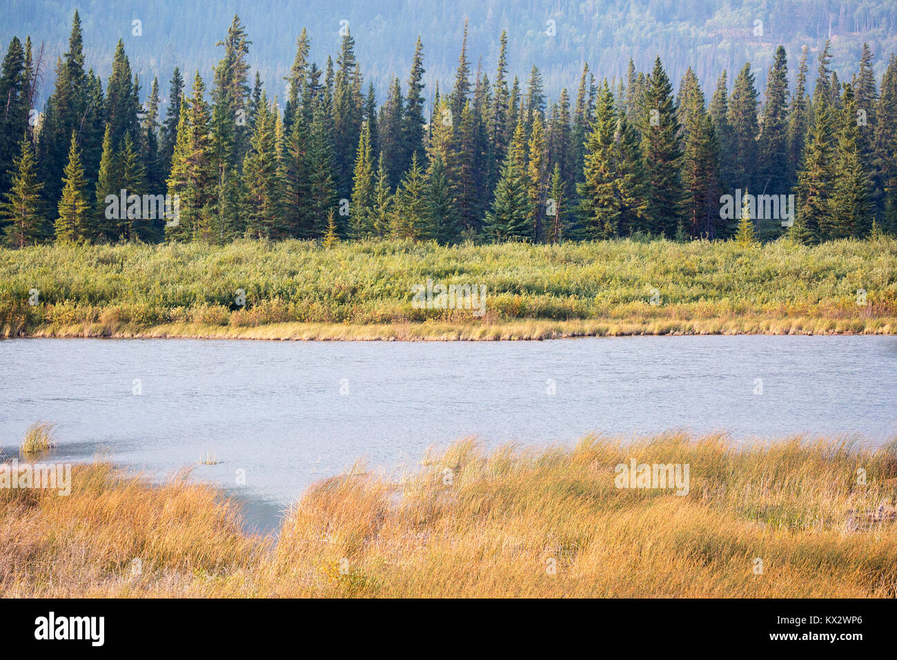 Marsh in montane ecosystem of  Banff National Park - Stock Image