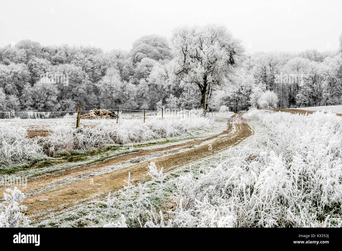 Frozen landscape. A dirt road sinks into the forest. On this cold winter morning, the bushes, the trees and the - Stock Image