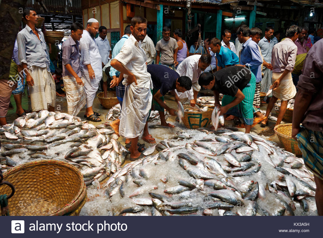 Largest Ilish fish market in Bangladesh, Chandpur, Chittagong, Bangladesh, South Asia, Asia - Stock Image