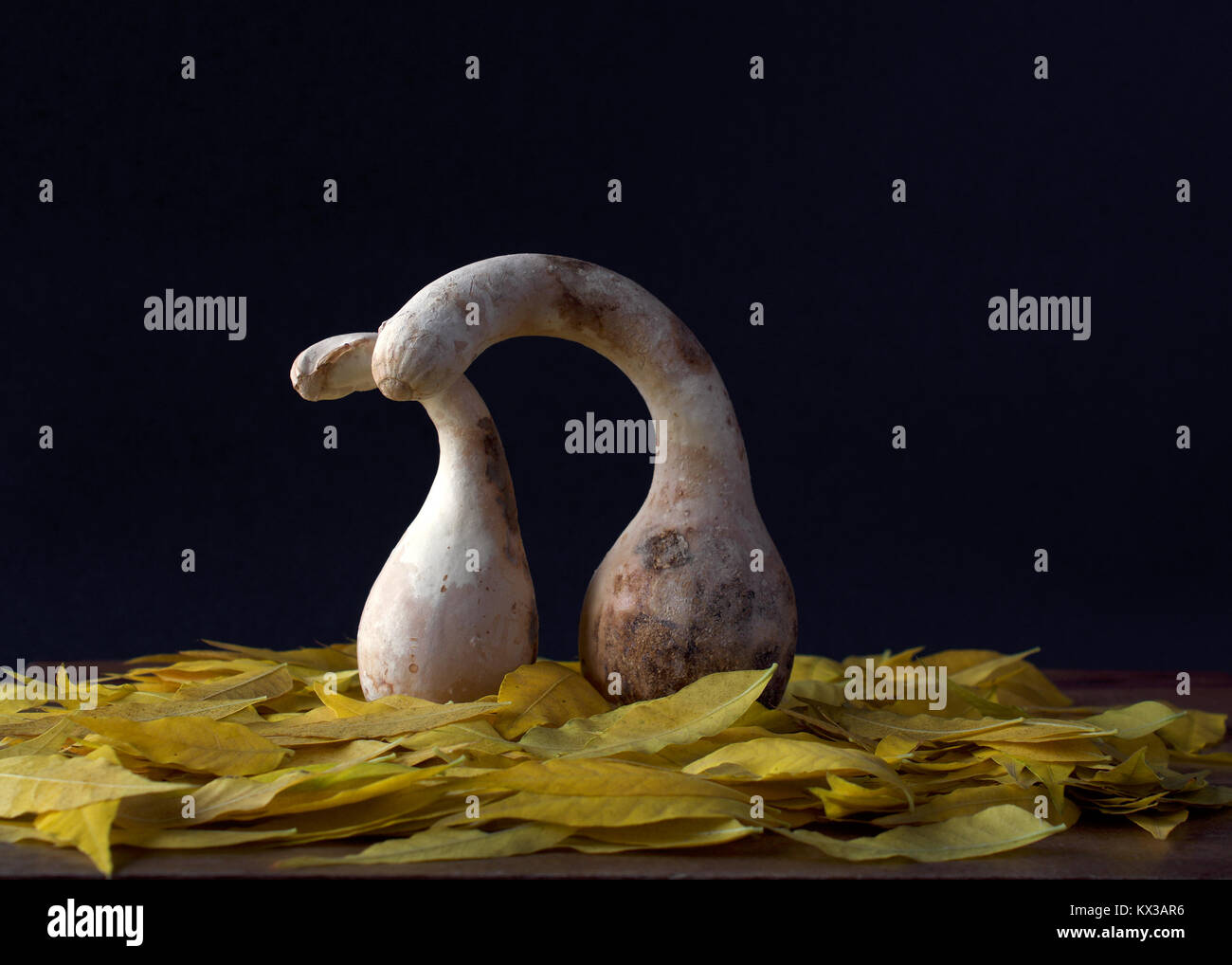 Still life showing two old, bird shaped gourds with long necks and beaks, one behind the other, in affectionate - Stock Image