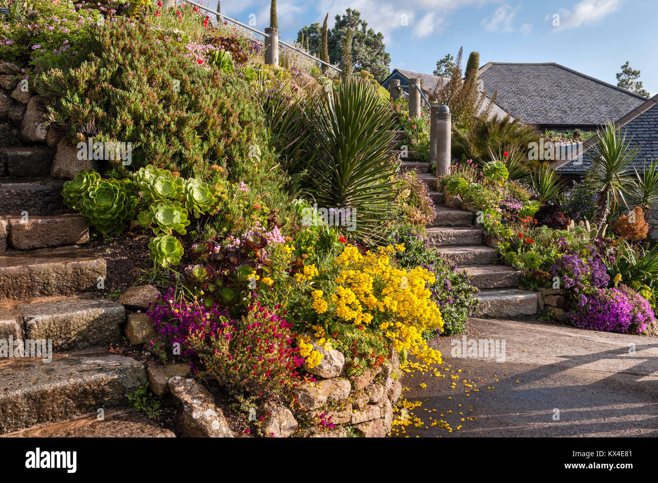The gardens of the Minack Theatre, Porthcurno, Cornwall, UK. A ...