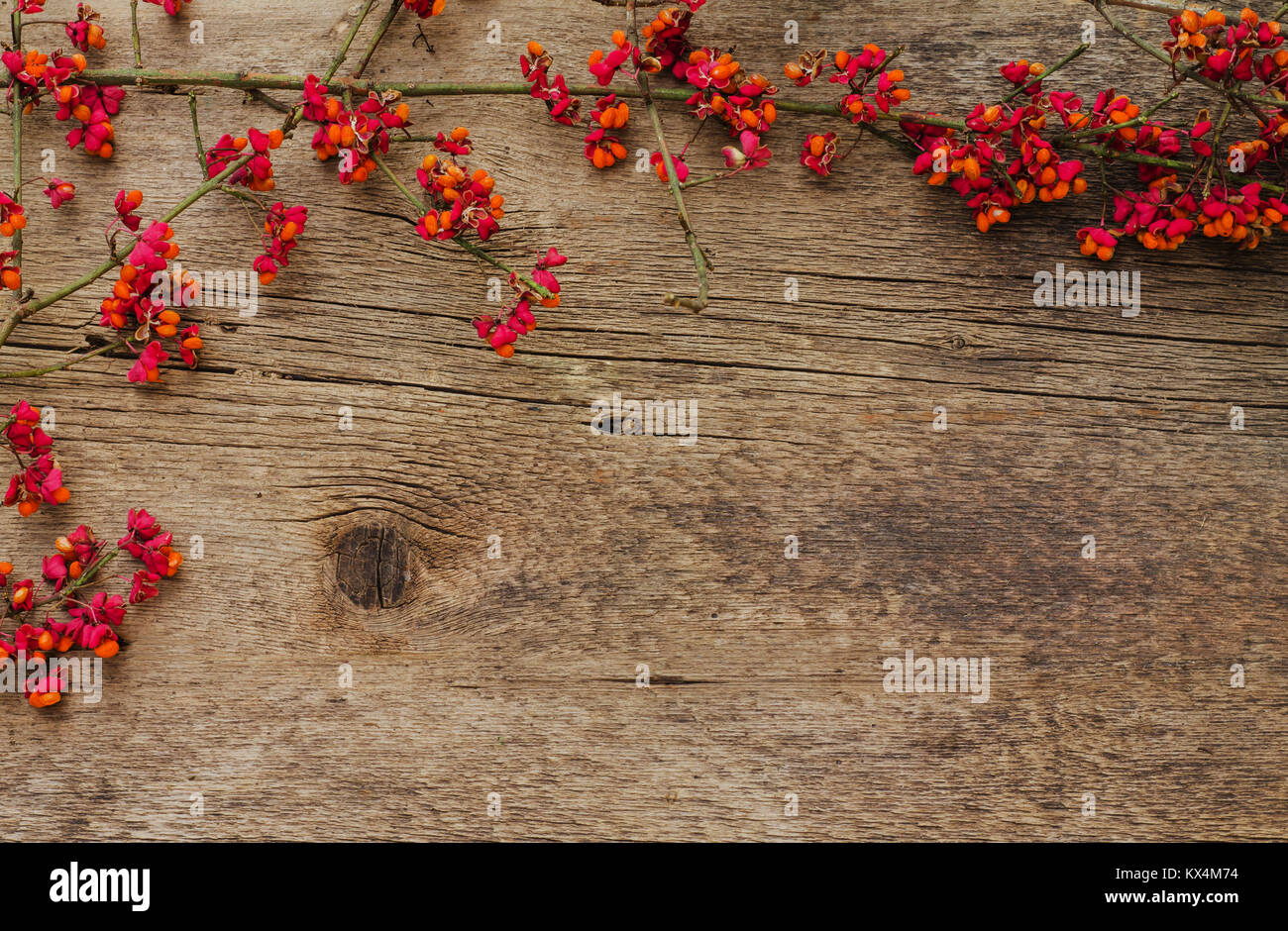 branch with red small flowers on a wooden background - Stock Image