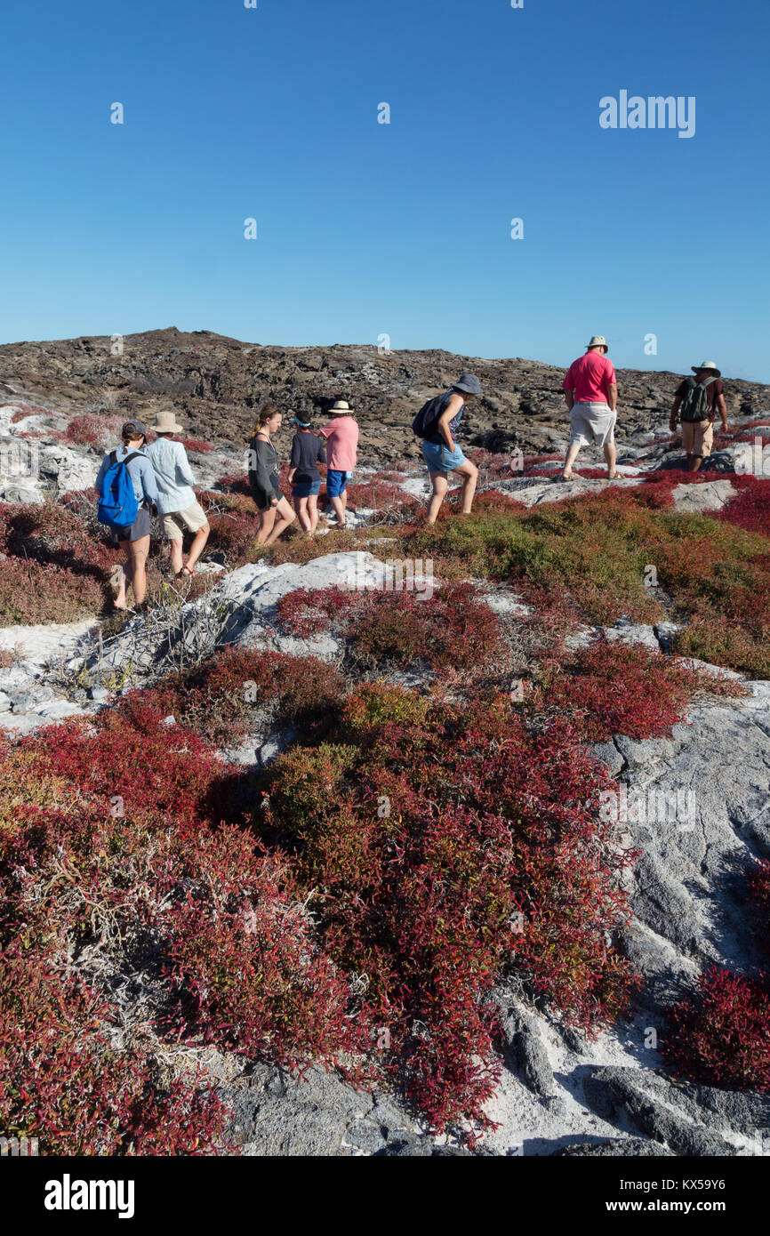 Tourists walking on Chinese Hat island amonst the colourful Galapagos Carpet Weed, Chinese Hat Island, Galapagos - Stock Image
