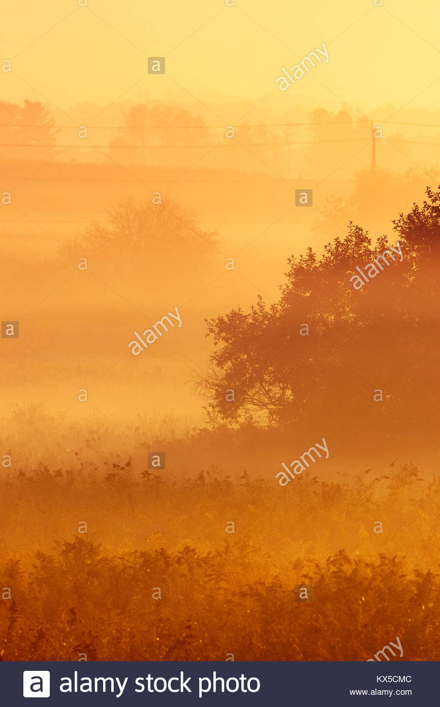 Radiation fog and misty trees in early morning in Whitby Ontario Canada - Stock Image