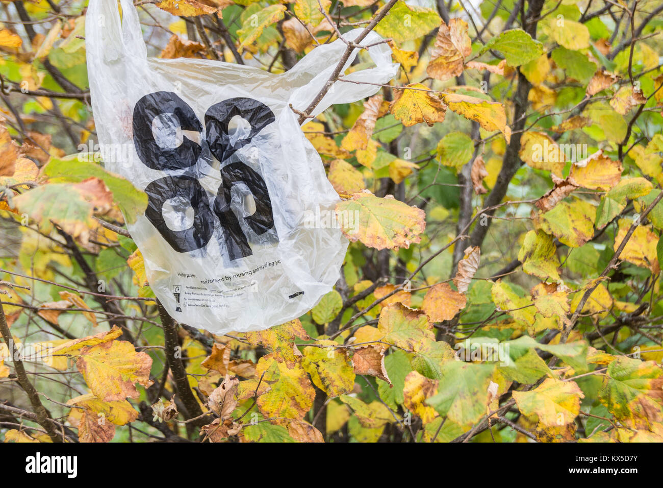 Plastic Coop supermarket bag on tree. UK - Stock Image