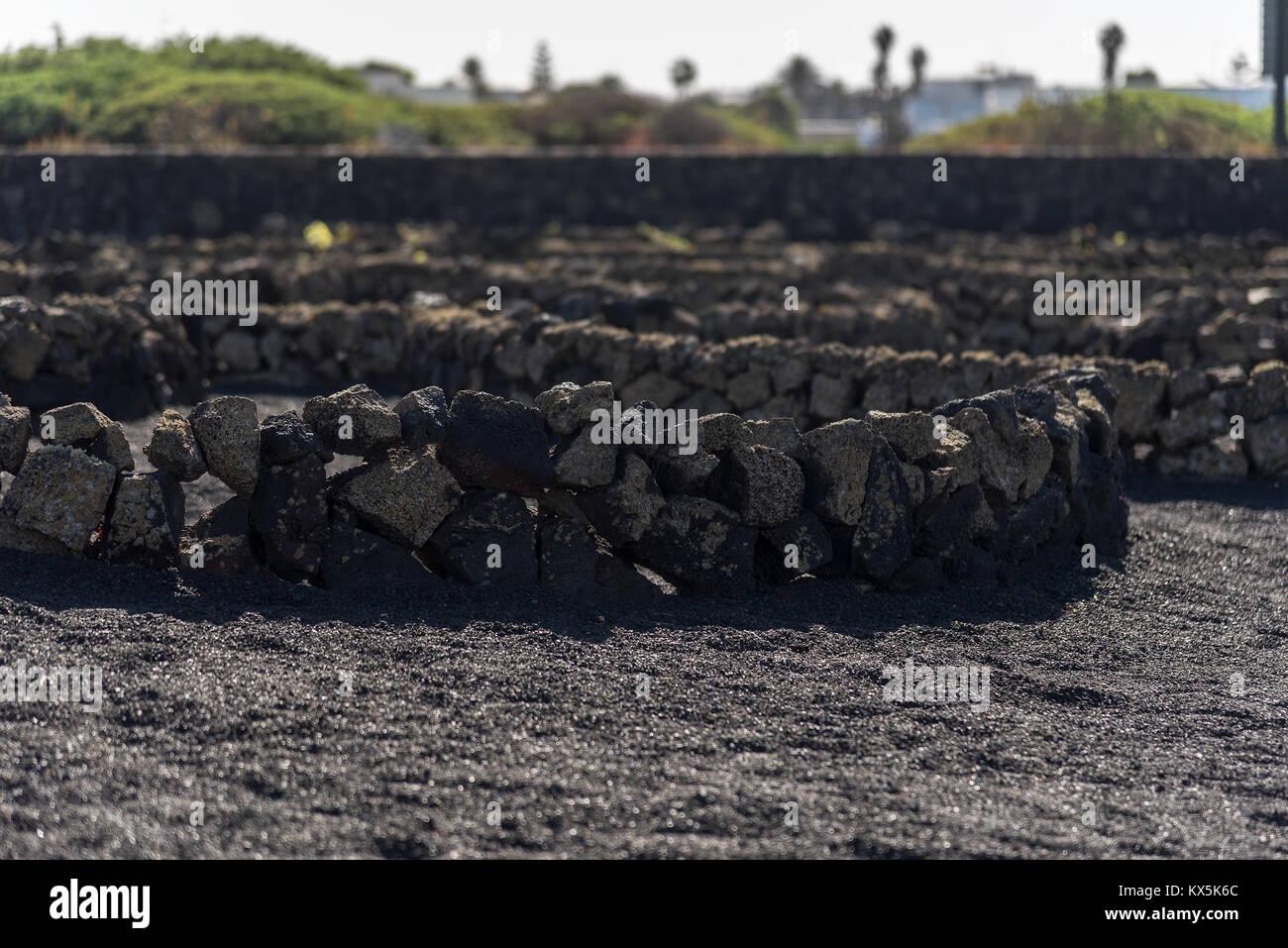 Lavasteinmauern zu Schutz der angebauten Pflanzen vor dem starken Wind auf Lanzarote - Stock Image
