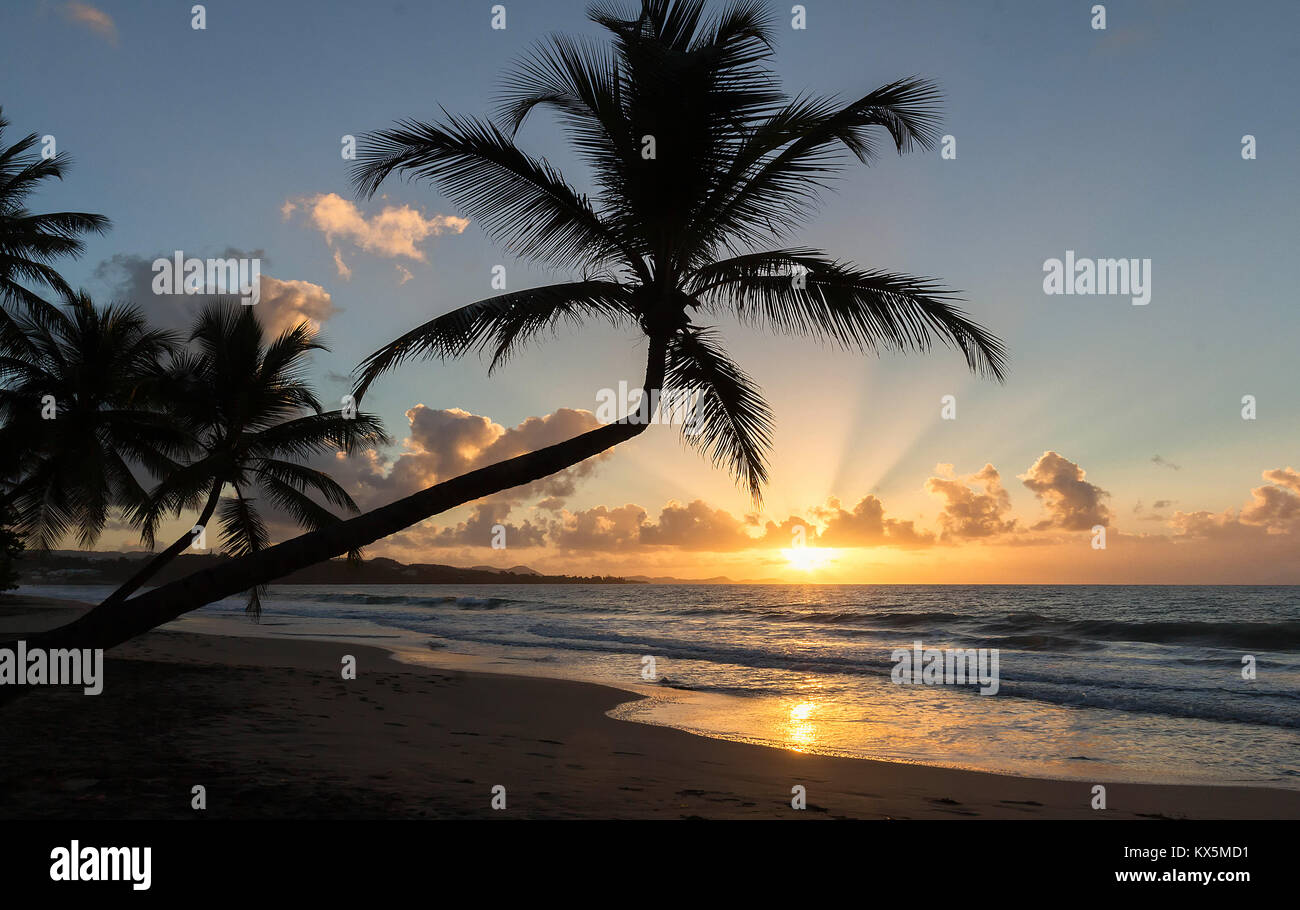 Sunset, paradise beach and palm trees, Martinique island. - Stock Image