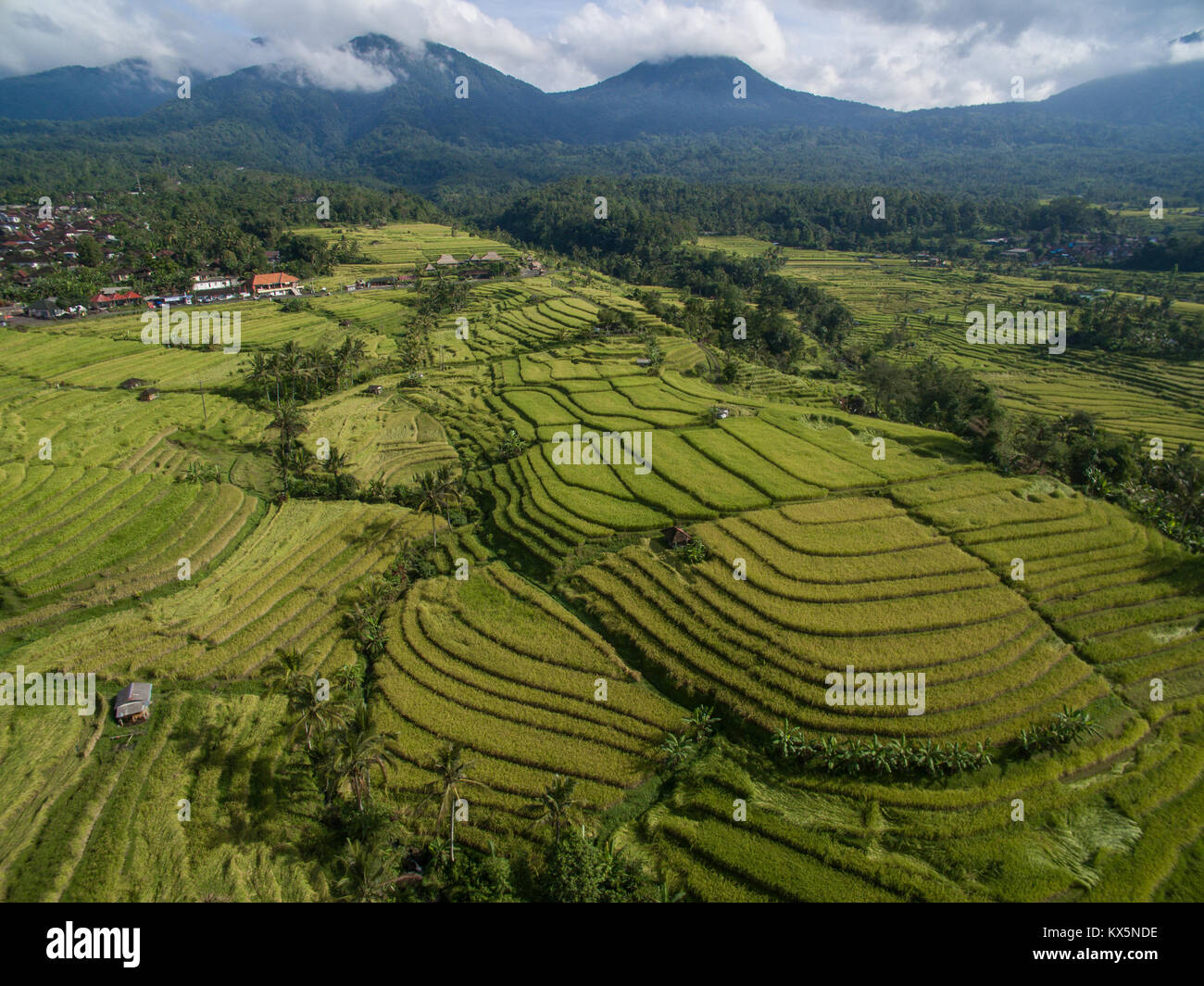 Bali UNESCO World Heritages Jatiluwih Rice Terrace, famous tourist destination in west part of Bali featured by - Stock Image
