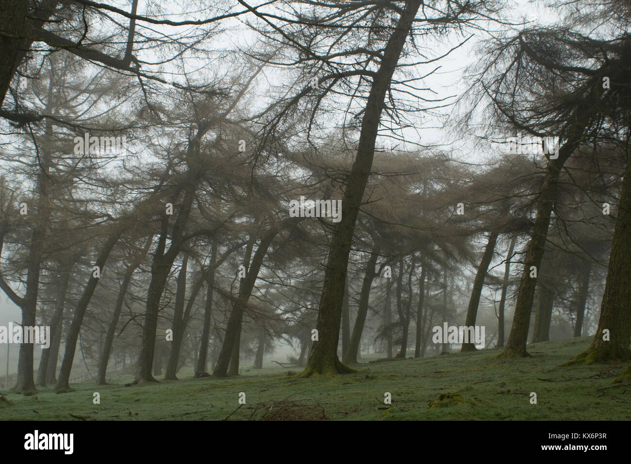 Welsh forests in the fog Stock Photo