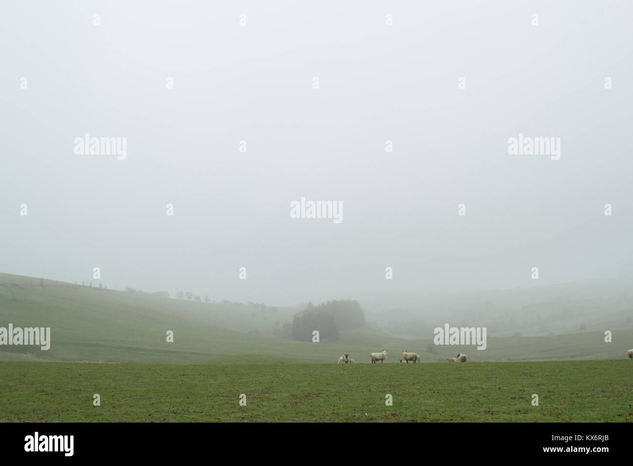 Welsh hills and farms Stock Photo