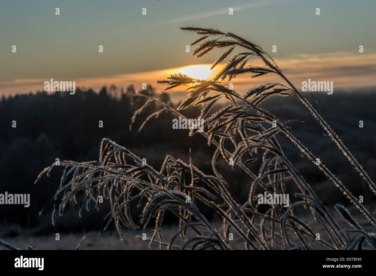 Ice cristals formed on a meadow in Niederfinow, Germany, 08 January 2018. Photo: Paul Zinken/dpa - Stock Image
